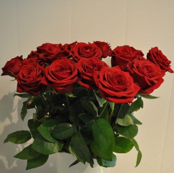 punane roos 1